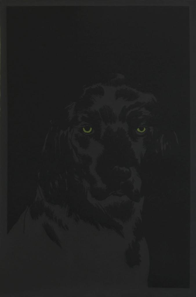 chien-dans-la-nuit